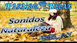 Un autentico bosque de cuento de hadas es el que nos relajara con sus bellas imágenes y sonidos.Relax, Entretenimiento y Mucho Mas están al alcance de tu mano ¿ a que esperas? Entra y Suscribete, Nuevos videos cada semana. Facebook: http://www.facebook.com/paraisorelax.relaxymeditacionGoogle+: http://plus.google.com/u/0/b/117441914635747685373/117441914635747685373/postsEl canal de Youtube PARAISO RELAX es el único canal de Youtube que no se centra en un solo tema, su variedad es inmensa, cubriendo todas las necesidades en cada momento de grandes y pequeños.  ¿Te lo Vas a Perder? Te espero con los brazos Abiertos