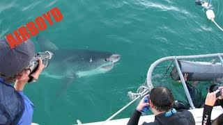Gansbaai South Africa  city pictures gallery : White Shark Cage Gansbaai, South Africa