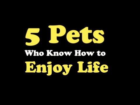 5-amici-che-sanno-godersi-la-vita