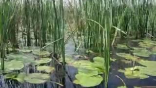 A lifetime journey in Danube Delta Biosphere Reserve from Romania,  can always be an unforgettable experience. Come here to observe a rich fauna and flora./O călătorie pe viață în Rezervația Biosferei Delta Dunării din România, poate fi întotdeauna o experiență de neuitat. Veniți aici ca să observați fauna și flora bogate.