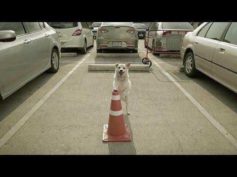 un cane attende il suo amico in un parcheggio: il motivo è assurdo...