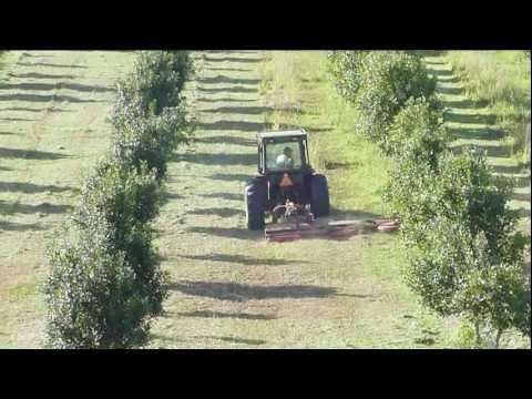 Fischer SL Feature Video