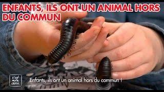 Video C'est mon choix : Enfants, ils ont un animal hors du commun ! MP3, 3GP, MP4, WEBM, AVI, FLV Agustus 2017
