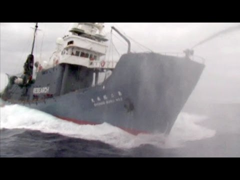 Final moments captured on video by the Ady Gil prior to ramming by Shonan Maru No. 2