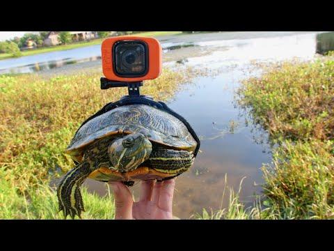 Американский блогер решил удивить необычным видео. Он надел камеру на черепаху.