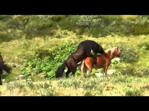 caballos salvajes - He creado este vídeo con el Editor de vídeo de YouTube (http://www.youtube.com/editor).