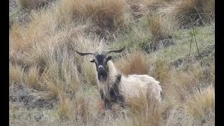 Nonton Goat Hunting New Zealand Film Subtitle Indonesia Streaming Movie Download