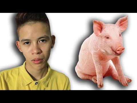 NTN - Cách Để Biến Con Người Thành Động Vật ( Transform Pig ) (видео)