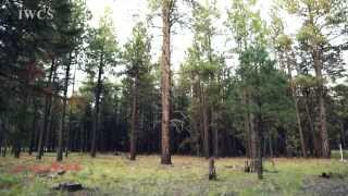 Natural Fire & Ponderosa Pine Forest
