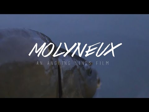 A Week at Molyneux, Jul 2014