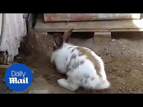 Pupu auttaa kissan pakenemaan – Prison Break