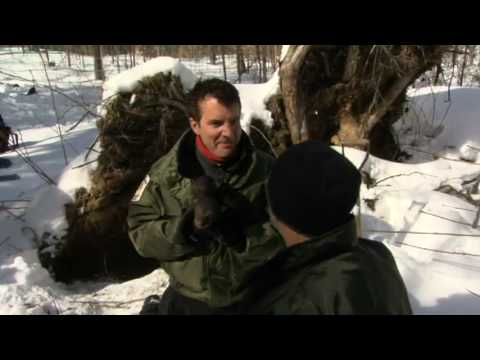 CBC TV host Rick Mercer visits Algonquin Park in Ontario and tags some bear.