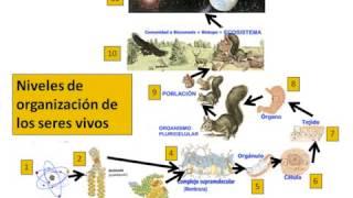 Niveles de organizacion de los seres vivos 360p