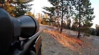 Nonton Elk Hunting 2014   Rifle Gopro And Dji Phantom 2 Vision  Film Subtitle Indonesia Streaming Movie Download
