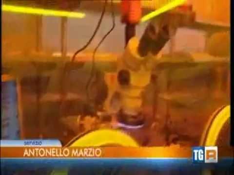 Assolombarda, proposte per un apprendistato semplice – servizio Rai TGR Lombardia