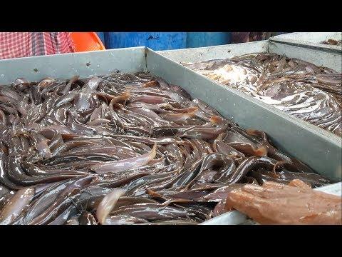 பங்களாதேஷ் மீன் சந்தைக்கு போய் வருவோமா ??  Live Fish Market / Most of The Fishes Are Alive & Fresh / Biggest Whole Sale Bazar Bangladesh