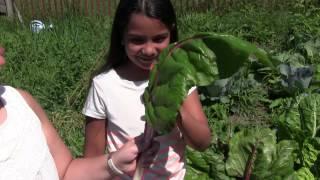 Harvesting MASSIVE 100% Organic Kale & Swiss Chard