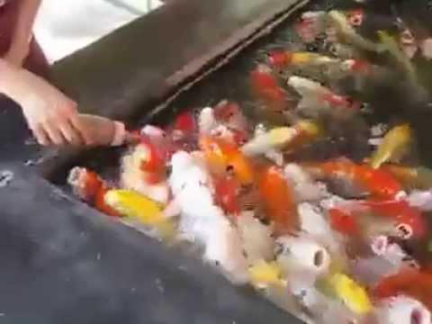 pesci veramente affamati!