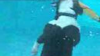 Boston Terrier Diving