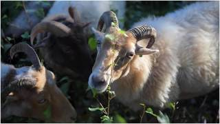 Kick off Nationaal Park Heuvelrug
