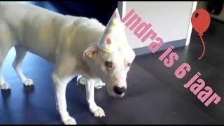 Abonneer en like deze video. Het kost je alleen een muisklik. Dus verder helemaal gratis!➡️ Vandaag is het groot feest in Nederland. Indra, de hond van Geesje is jarig en dat wordt gevierd. Max en Luka ook verwent. En wij gaan feesten op Zrce en die Vlog zien jullie morgen.  Groetjes Marina #YouTubeQueenJOEHOEHOE…http://www.blindhappyandfree.comJe kunt mij ook vinden op:http://www.facebook.com/marinakatarinakovachttp://www.twitter.com/MarinaKKovachttp://www.instagram.com/marinakatarinakovacMusical.ly: @kuss_marinaSnapchat: kuss_marinaOf mail naar: marinakovac2004@gmail.comFan mail kan naar het postadres:Familie De ManT.a.v. MarinaDe Heerlijkheid 853344 BP H. I. Ambacht#YouTube #Google #Blind #Pag #Kroatië #Zrce