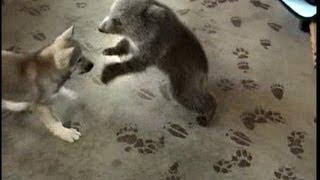Ursinho brincando com o cãozinho
