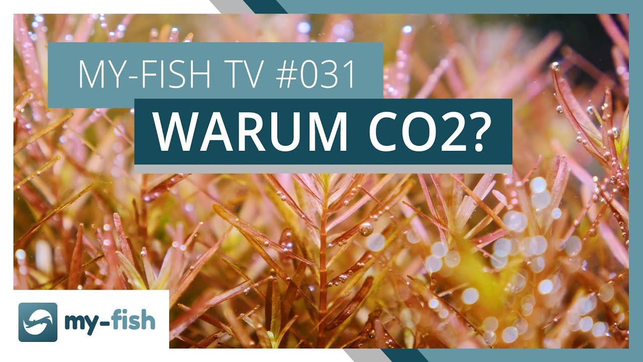 my-fish TV - Deine Nr. 1 Anlaufstelle für alle Themen rund um die Aquaristik 33