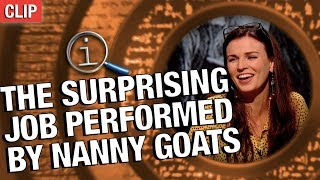 QI | The Surprising Job Performed By Nanny Goats