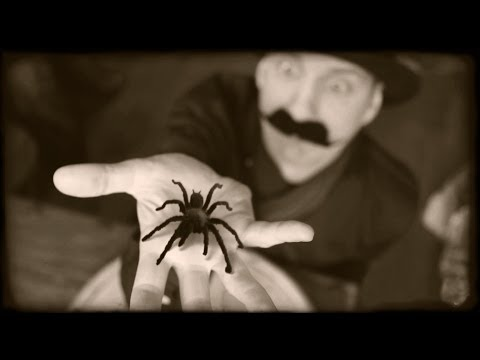 fear of spiders - Show this video to someone who's afraid of spiders! on facebook: http://tinyurl.com/spiders-conquer-your-fear links : http://www.youtube.com/watch?v=9WiHDAhb...