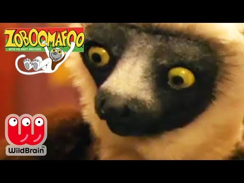 Zoboomafoo | Full Episode: Wild Lemurs | Animals For Kids