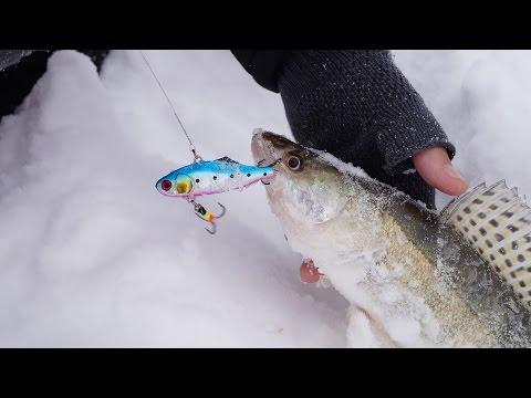 рыбалка на судака леща