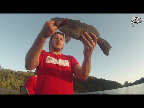 Smallmouth Bass Willamette River Portland, Oregon