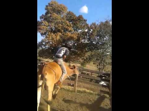 Rodeio treino em Heitoraí