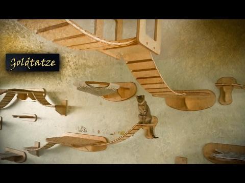 🙀 Goldtatze © Katzenzimmer | Katzen Möbel aus Holz | Cat Tree Room