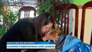 Cachorro é encontrado uma semana após acidente com a dona em rodovia