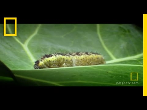 Body Invaders | National Geographic