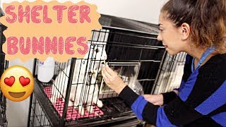 Donating Rabbit Toys to Homeless Bunnies at the Shelter