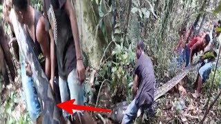 Video Mendebarkan !! Proses Penangkapan Piton Raksasa Yg Menghebohkan Warga !! MP3, 3GP, MP4, WEBM, AVI, FLV Agustus 2018
