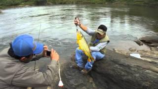 Pesca De Dourados E Piraputangas Com Iscas Artificiais 2 - Rio Miranda (HD)