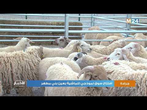 إقليم جرادة: افتتاح سوق نموذجي للماشية بعين بني مطهر