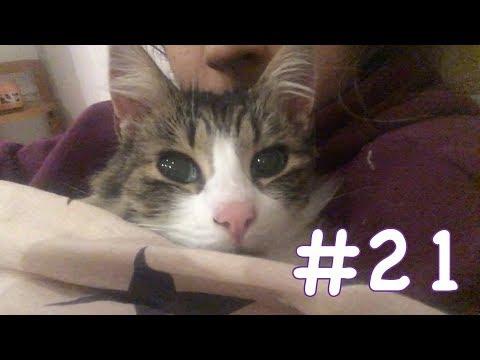 Vlog #21: Jamie's Emergency Surgery || Shaaba.