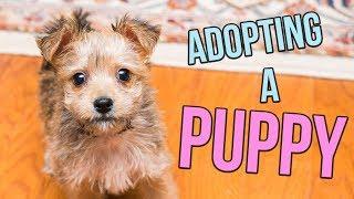Video Adopting a PUPPY! MP3, 3GP, MP4, WEBM, AVI, FLV Desember 2018