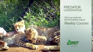 PREDATORS of AFRICA - Special Course