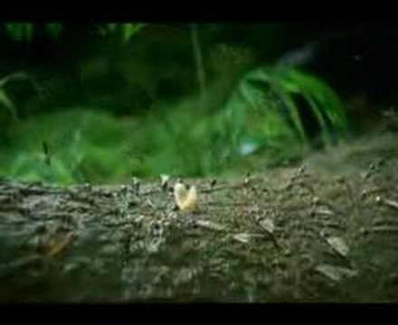 Mosquito Xbox commercial (gen16.com)