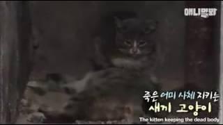 Zobaczył małego kotka leżącego tuż obok martwej kocicy… To, co stało się po chwili, złamało mu serce!