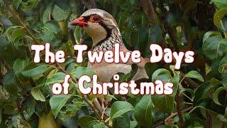 Christmas - Twelve Days of Christmas