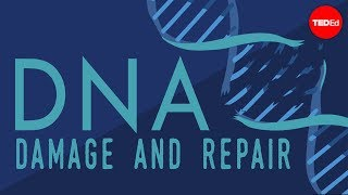 What happens when your DNA is damaged? – Monica Menesini