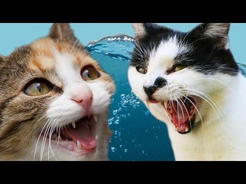 reazioni strabilianti di gatti che entrano in contatto con l'acqua
