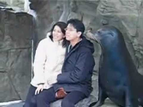 Fotoğraf çekilen adamı öpen fok!