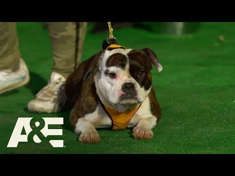 Team Minion is BACK to Compete in Competition Finals | America's Top Dog (Season 1) | A&E